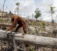 Palm Oil picture