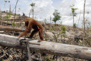 Palm Oil picture